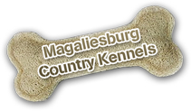 Let your dog have a holiday at our Country Kennels while you enjoy your holiday